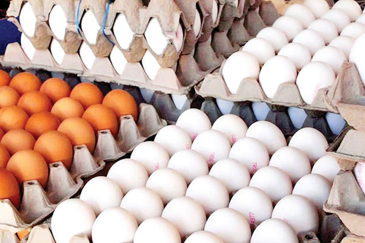 قیمت تخم مرغ در زمستان افزایشی می شود؟